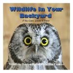 Wildlife In Your Backyard